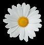 casino-bonus.spring-daisy